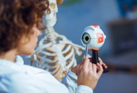 Photo Medical doctor woman teaching anatomy using human eye model